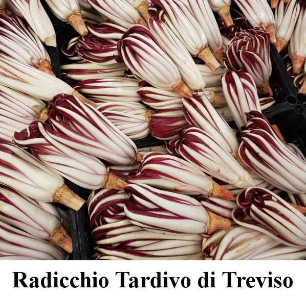 Radicchio Tardivo di Treviso - Vegetarian Cooking Classes in Italy